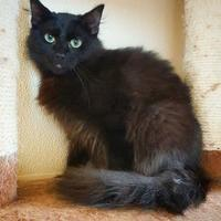 Adopt A Pet :: Alex - Fredericksburg, TX