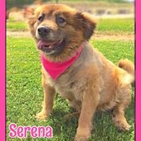 Adopt A Pet :: Serena - Jasper, IN