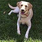Adopt A Pet :: Jelly