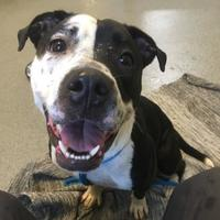 Adopt A Pet :: Dory - Fallston, MD