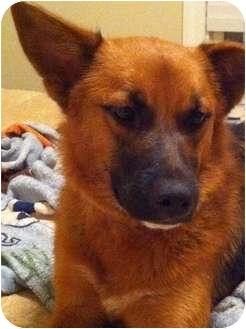 Terrier (Unknown Type, Medium) Mix Dog for adoption in Waxhaw, North Carolina - Bailey