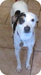 Terrier (Unknown Type, Small) Mix Dog for adoption in Tahlequah, Oklahoma - Bronte