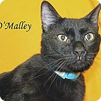 Adopt A Pet :: O'Malley - Jackson, MS