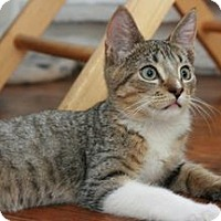 Adopt A Pet :: Brando - Canoga Park, CA