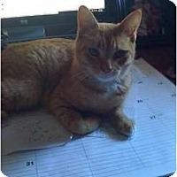 Adopt A Pet :: Roscoe - Mobile, AL
