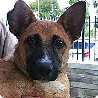 Adopt A Pet :: Baxter - white settlment, TX