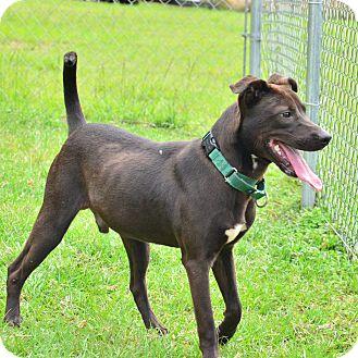 Hound (Unknown Type)/Hound (Unknown Type) Mix Dog for adoption in Brooksville, Florida - 10309426 LUCAS