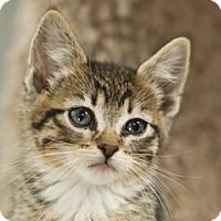 Adopt A Pet :: Delilah - Great Falls, MT