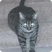 Adopt A Pet :: Tiger - Caro, MI
