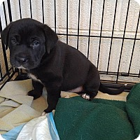 Adopt A Pet :: Peaches - Bryson City, NC