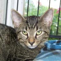 Adopt A Pet :: Pippin - Westville, IN