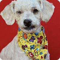 Adopt A Pet :: Earl - Irvine, CA