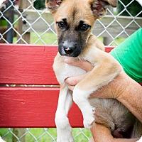 Adopt A Pet :: Gracie - Patterson, NY