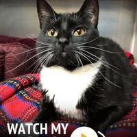 Adopt A Pet :: Lady Luck - Williamsburg, VA