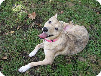 Australian Cattle Dog/Basenji Mix Dog for adoption in Edgewater, New Jersey - Miley