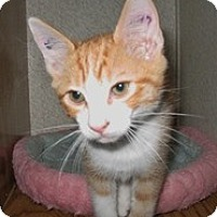 Adopt A Pet :: Lonzo - Shelton, WA