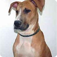 Adopt A Pet :: Timmy - Port Washington, NY