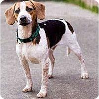 Adopt A Pet :: Loki - Portland, OR