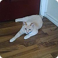 Adopt A Pet :: Asia - Walla Walla, WA