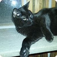 Adopt A Pet :: Buster - Delmont, PA