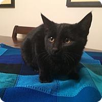 Adopt A Pet :: Mork - Edmonton, AB