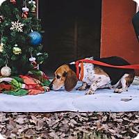Adopt A Pet :: Leroy - Gadsden, AL