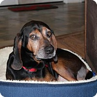 Adopt A Pet :: Flash - Howell, MI
