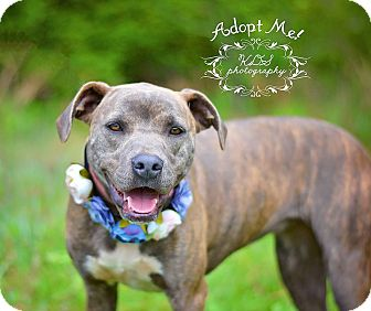 Plott Hound Mix Dog for adoption in Fort Valley, Georgia - Lola