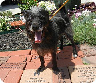 Terrier (Unknown Type, Medium) Mix Dog for adoption in Houston, Texas - Terry