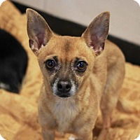 Adopt A Pet :: Spud - Redwood City, CA