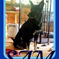 Adopt A Pet :: SAM - New Brunswick, NJ
