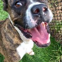 Adopt A Pet :: Mac - Land O'Lakes, FL