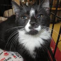 Adopt A Pet :: Gage - Ellicott City, MD