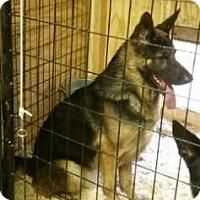 Adopt A Pet :: Torr - Quincy, IN