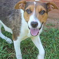 Adopt A Pet :: Candi - Burlington, NJ
