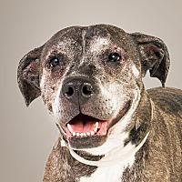 Adopt A Pet :: Suella - Prescott, AZ