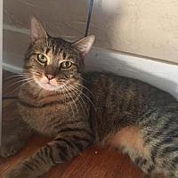 Adopt A Pet :: Jerry - Asheville, NC
