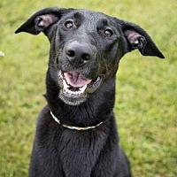 Adopt A Pet :: Gru - Lockport, NY