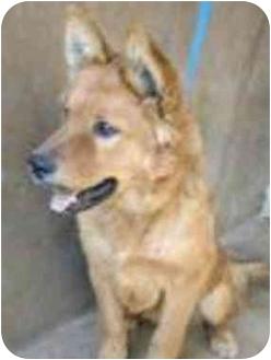 Chow Chow Mix Dog for adoption in Vista, California - Floyd