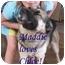 Photo 3 - German Shepherd Dog/Labrador Retriever Mix Puppy for adoption in Vista, California - Chloe