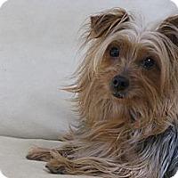 Adopt A Pet :: Miley - Atlanta, GA