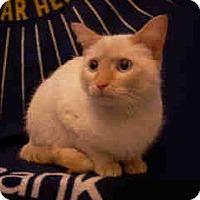 Adopt A Pet :: Keena (lapsitter/dog lover) - Arlington, VA