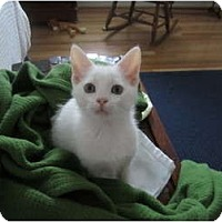 Adopt A Pet :: Bartley - Richmond, VA