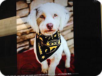 Collie Mix Dog for adoption in Scottsdale, Arizona - Benji