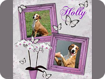 Foxhound Mix Dog for adoption in Tampa, Florida - Holly