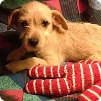 Adopt A Pet :: Tawny - Chandler, AZ