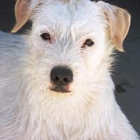 Adopt A Pet :: Leo - Castaic, CA