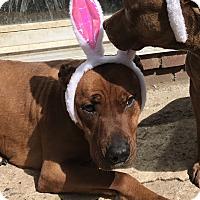 Adopt A Pet :: Cooper - Long Beach, NY