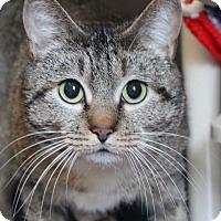 Adopt A Pet :: Daphne - Middletown, CT