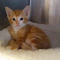Adopt A Pet :: Richie - Loxahatchee, FL